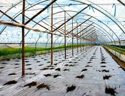 Materialele plastice utilizate in legumicultura - Folie Polietilena PE pentru solarii mulcire sau germinatie - Policlorura de vinil PVC - Relon