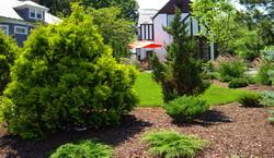 Plantare arbori si arbusti ornamentali