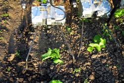 Utilaj de plivit inteligent la legume