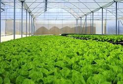 cultivarea eficienta a legumelor in sere si solarii