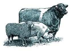 prevenire antrax la animale