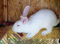 Microclimat iepuri