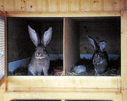 Microclimatul in adaposturile de iepuri