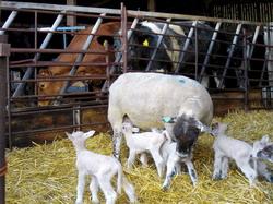 Pregatirea si ingrijirea animalelor pentru iarna