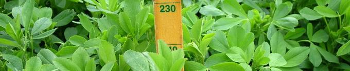 Biocrop - seminte pentru culturi de primavara - lucerna
