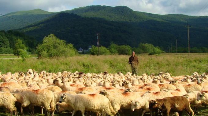 Drumul oii - Transhumanta