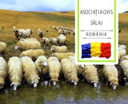 Expozitia de ovine Simleul Silvaniei jud Salaj