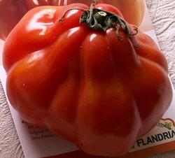 Tomatele - productia mondiala de rosii si valoarea lor economica