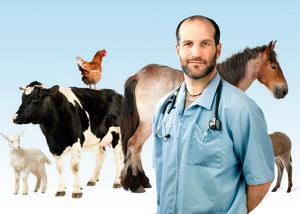 Obligatii si responsabilitatii privind supravegherea si prevenirea bolilor transmisibile la animale si de la animale la om