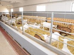 large ferma capre 5