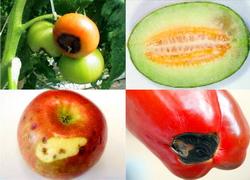 Calciul in fertilizarea legumelor si fructelor