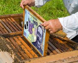 cereri de sprijin apicultura PNA 2014-2016