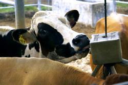 Fosforul in alimentatia animalelor