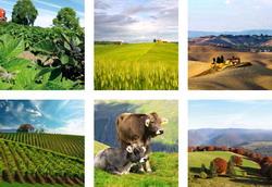 Platile nationale tranzitorii inlocuiesc platile directe din agricultura