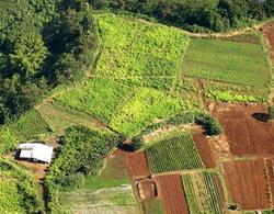 ajutoare nationale tranzitorii vegetal 2014