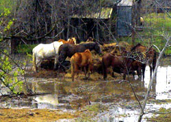 protectia animalelor afectate de inundatii