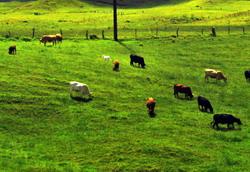 Amenajamentele pastorale