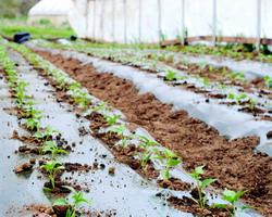 Plati sector legume fructe