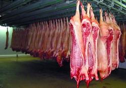 abatorizarea porcinelor