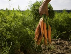 Plati suplimentare agricultura ecologica