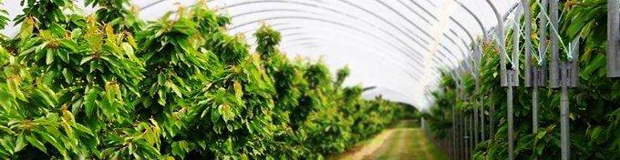 Solarii legumicultura 3