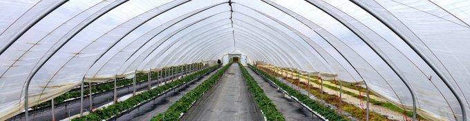 Solarii legumicultura 4