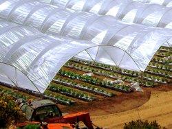 Solarii legumicultura Marea Britanie