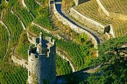 Franta cauta parteneri in domeniul viticol