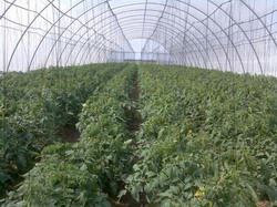1327146177 305948095 12-solarii-craiovasere-legume-craiovainstalatii-de-irigare-prin-picurare-craiova- resize