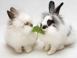 Hranirea iepurilor