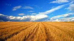 Strainii detin 20% din terenurile agricole