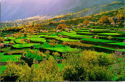 Hunza-Terraced-Fields resize