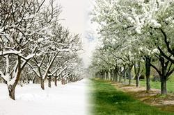 Tratamente-de-iarna-primavara