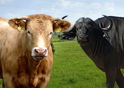 Au fost aprobate cuantumurile pentru sprijinul cuplat in sectorul zootehnic - SCZ pentru anul de cerere 2020
