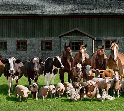 Fermierii pot depune la APIA cererile de plata pentru ajutorul de stat in sectorul cresterii animalelor aferente serviciilor prestate in luna decembrie si trimestrul al IV-lea al anului 2020