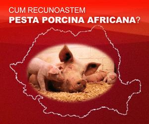 Cum sa recunoastem Pesta Porcina Africana (PPA) ?