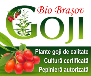 Material saditor arbusti fructiferi - Cultura de Goji