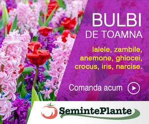 Bulbi de toamna - Alege din selectia noastra de flori precum lalele, zambile, narcise, ghiocei, crocus, iris, anemone.
