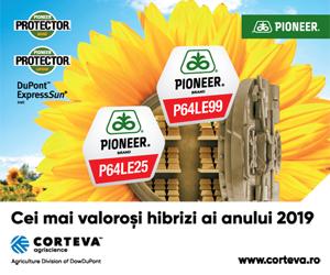 Hibrizi de floarea-soarelui marca Pioneer | Cei mai valorosi hibrizi ai anului 2019