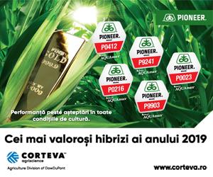 Cei mai valorosi hibrizi de porumb Pioneer pentru anul 2019